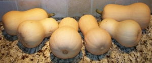 Butternut squash from our garden