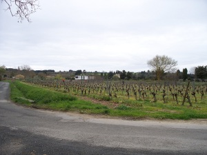 Vineyards at the high school