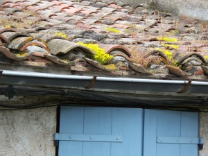 Rooftop succulents