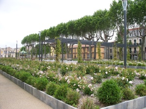 Roses at Square Gambetta