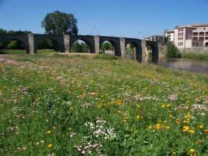 Wildflowers adorn the 14th century bridge