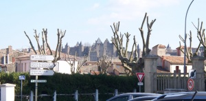 Newly-pruned trees await spring